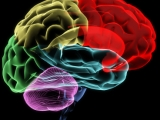 Protect the Brain – Change theWorld
